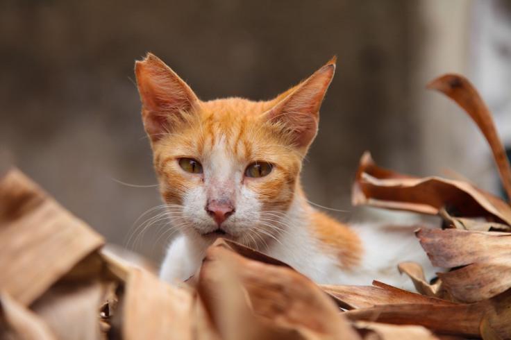 Cats of Lamu-5350